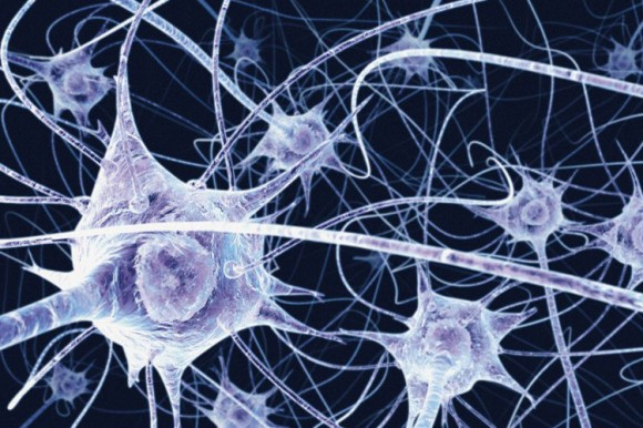 Adult Neurons 38