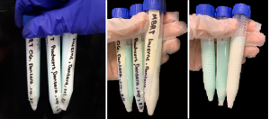 Garg, Jana, Rai, Wu Fig. B: First check of MBRT with expired milk samples and last check of MBRT. It is showing a minimal color loss in the Organic Valley and Producers samples, with a significant color change in Lucerne. (left to right)
