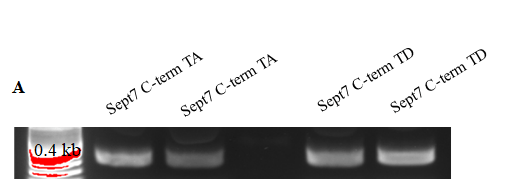 Srivastava, Figure 1b